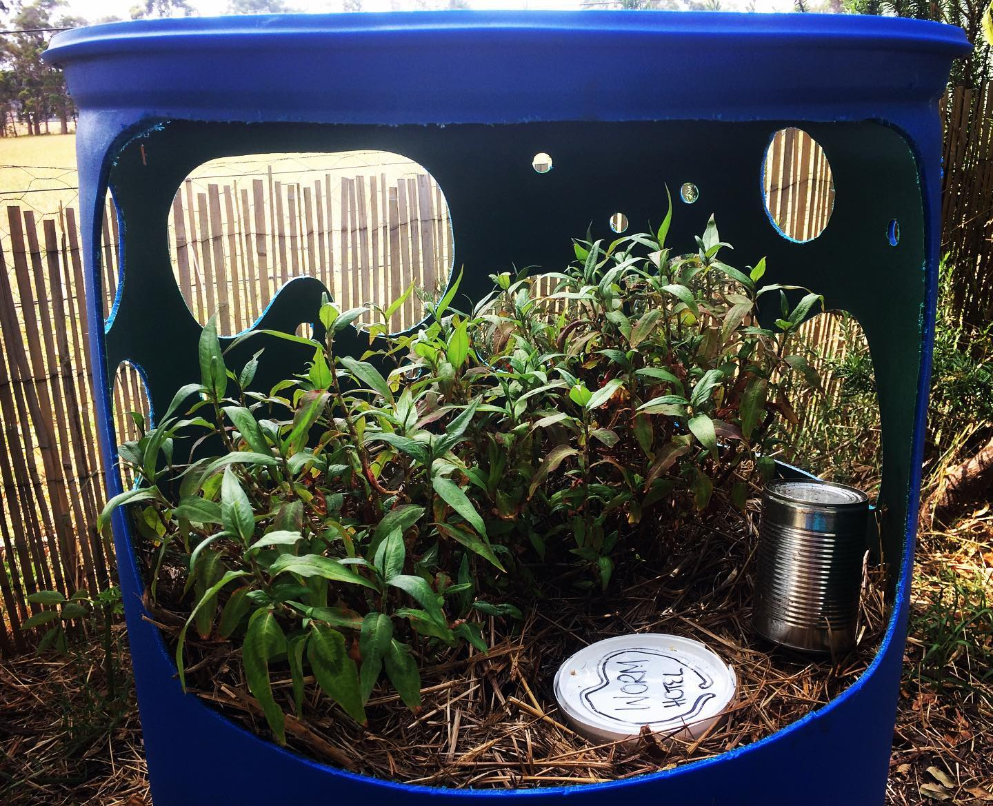 Wicking Beds and Waterwise Gardening Workshop